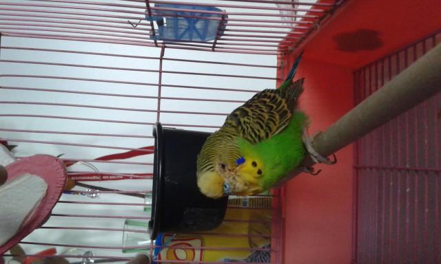 Нашли попугая - 20150406_174255.jpg