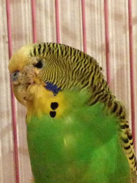 Нашли попугая - IMG_3693.JPG