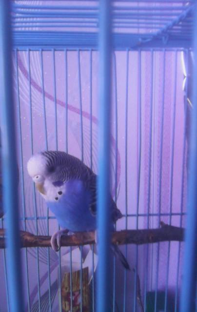 Попугай перестал летать. - IMG_20150317_132340.jpg
