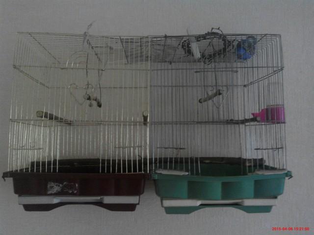 Рассадить попугаев? - IMG_20150406_152150.jpg