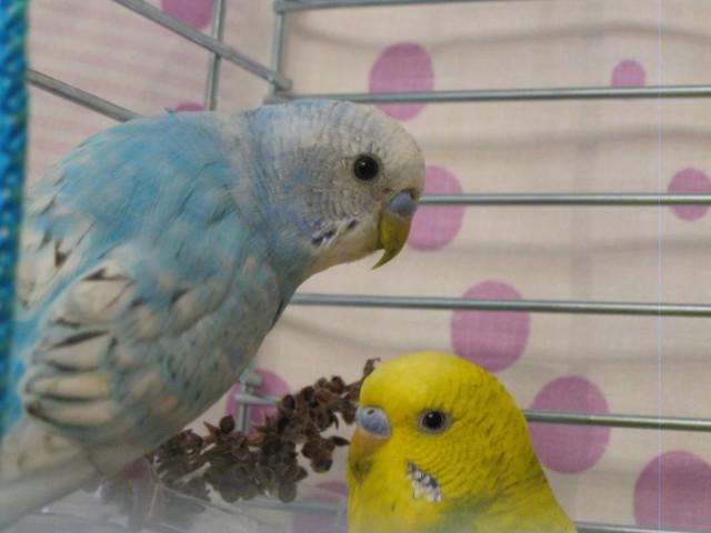 Наши птицы - IMG_2636.JPG