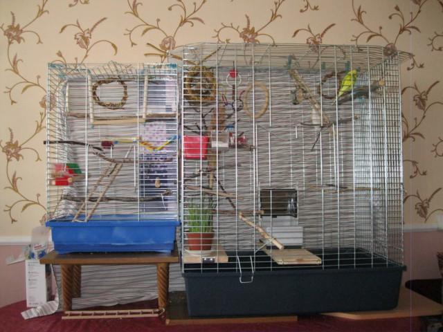 Наши птицы - IMG_2712.JPG