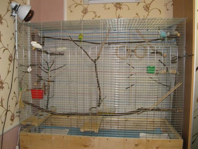 Наши птицы - IMG_2755.JPG