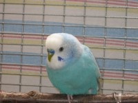 Наши птицы - IMG_2763.JPG