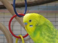 Наши птицы - IMG_2773.JPG