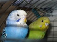 Наши птицы - IMG_2807.JPG