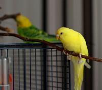 Интресные фотографии попугаев - xft 169.jpg
