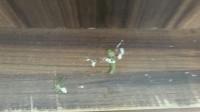 волнистый попугайчик заболел - -3d8Vr0_cms.jpg