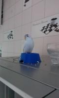 У попугая помет с водой - IMAG0598.jpg