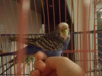 Заболел попугайка - SAM_2862.JPG