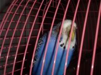 Заболел попугайка - SAM_2867.JPG