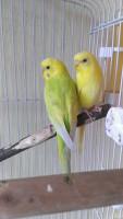 Кирюша и Сафия! - IMAG4290.jpg