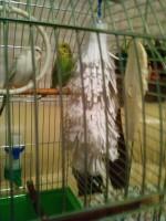 Помет с водой у попугаев - IMG_20150419_205423.jpg