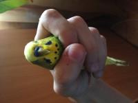 клюв попугая - IMG_2332.JPG