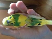 Птичка не может ходить и почти не ест. - IMG_2334.JPG