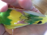 Птичка не может ходить и почти не ест. - IMG_2336.JPG