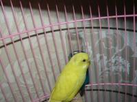 попугай - P1070540.JPG