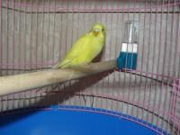 попугай - P1070529.JPG