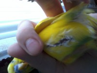 У попугая лысая грудка - 20150421_134655[1].jpg