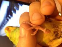 Помогите нам и попугайчику) - image1.JPG