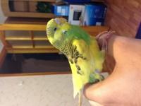 Помогите нам и попугайчику) - image3.JPG