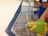 Помогите нам и попугайчику) - IMG_0392.JPG