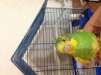 Помогите нам и попугайчику) - IMG_0394.JPG