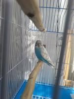 Зерно в помете птицы. - 20150424_161151.jpg