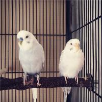 Лукас и Розалита - 43c7c0804a64.jpg