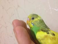 Помогите нам и попугайчику) - IMG_0411.JPG