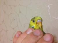 Помогите нам и попугайчику) - IMG_0412.JPG