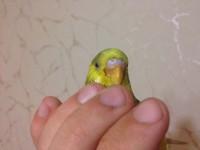 Помогите нам и попугайчику) - IMG_0413.JPG