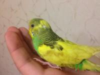 Помогите нам и попугайчику) - IMG_0414.JPG