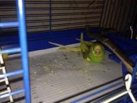 Помогите нам и попугайчику) - IMG_0407.JPG