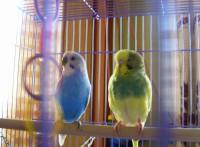 У птицы подозрение на рвоту - DSCN3511.JPG