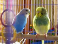 У птицы подозрение на рвоту - DSCN3512.JPG