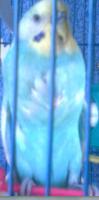 Лысина справа и слева с кровоподтёком - Снимок.PNG1.PNG