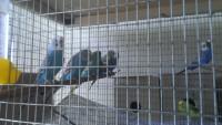 Птиц было много! - IMAG4511_BURST002.jpg