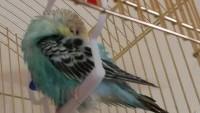 Попугай не может взлететь - 20150501_145724[1].jpg