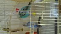 Попугай не может взлететь - 20150501_141550[1].jpg