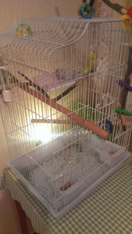 У попугая кашель - IMAG5130.jpg