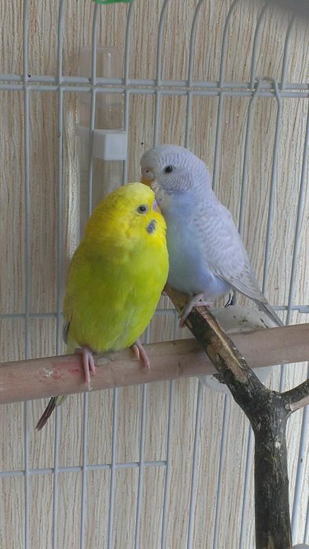Молодая парочка Кирюша и Сафия - IMAG5060.jpg