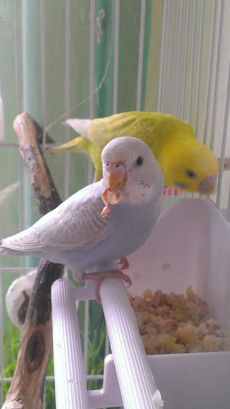 Молодая парочка Кирюша и Сафия - IMAG4695.jpg