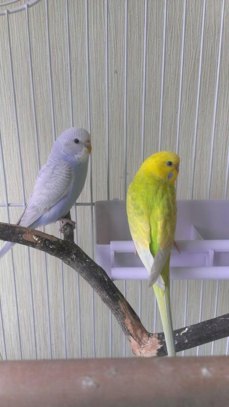 Молодая парочка Кирюша и Сафия - IMAG4691.jpg