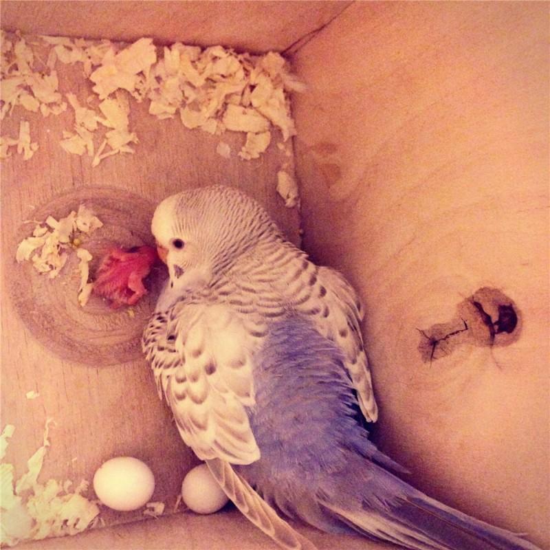 Гнездование Лукаса и Розалиты - 6e058b912f12.jpg