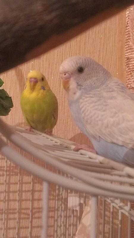 Молодая парочка Кирюша и Сафия - IMAG5135.jpg