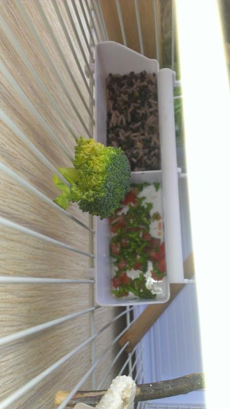 Помидор с листом салата нарезан, кишка рис+чечевица белуга - IMAG5169.jpg