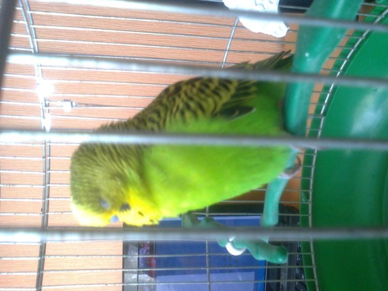 Что с попугаем? - фото1246.jpg