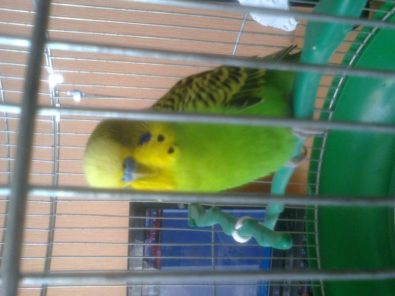 Что с попугаем? - фото1245.jpg