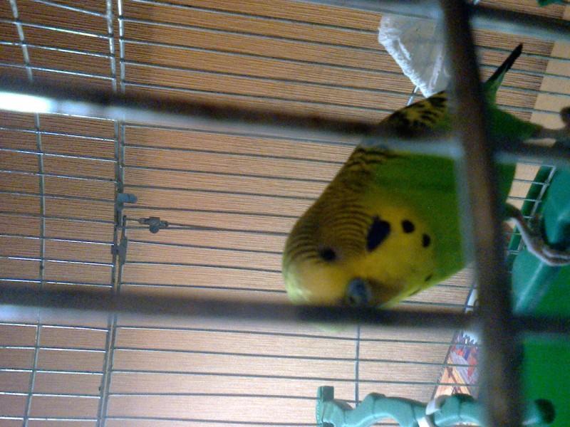 Что с попугаем? - фото1252.jpg